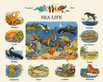 Cargill melanie sea life medium