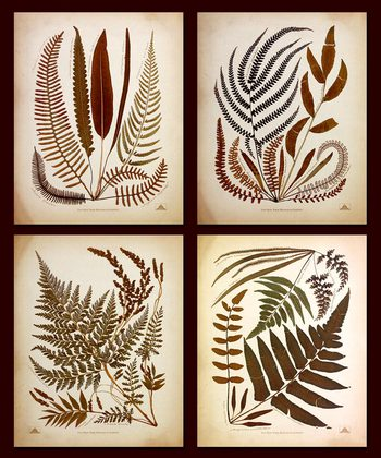 Nicht bekannt 4er Set 'Fern Collection I - IV'