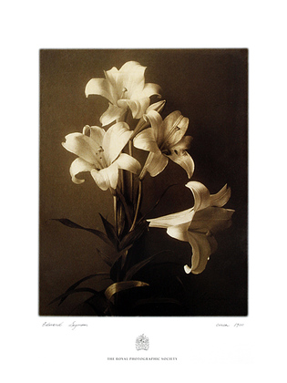 Eduard Seymon 2er Set 'Lilies' + 'Petunia'