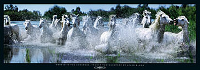 Steve Bloom Horses in the Camargue