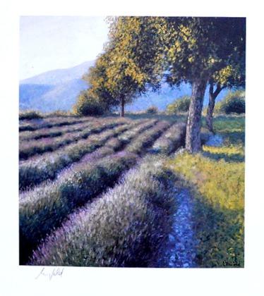 Lutz Muenzfeld Junger Lavendel