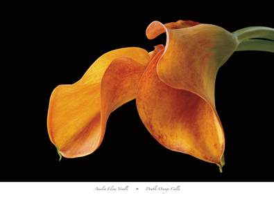 Amalia Elena Veralli Double Orange Calla