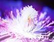 Kirsten Riedt White and Purple