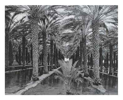 unbekannter Kuenstler Palmenanlage