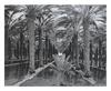Kuenstler unbekannter palmenanlage medium