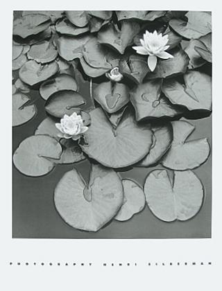 Henri Silberman Wasserlilien