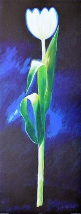 Karsten Kirchner Weisse Tulpe