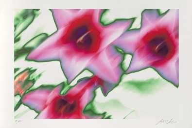 Norbert Schaefer Star Tulip (2002)