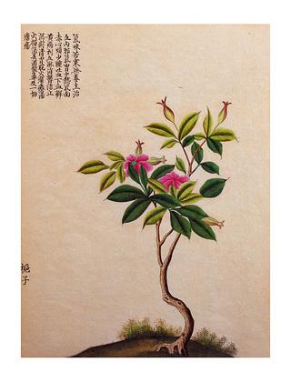 Nicht bekannt Chinese Print I