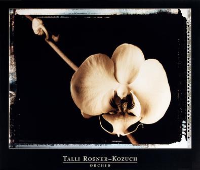 Talli Rosner-Kozuch Orchid